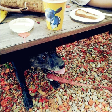 Mabel's, Small Stall and Little Loren Pop Up. Photos by Goldtoast Supper Club. We are in the Crave Gold Coast Directory, look us up in events (16)